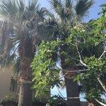 Пальмы на территории