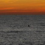 delfini al tramonto