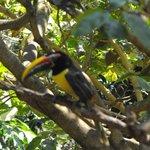 a toucan in the bird garden