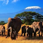 Wildlife Safari Exploreans Day Trips