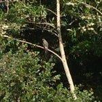Exquisite garden visitor peregrine falcon