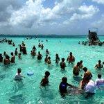 Everyone swimming at Stingray City