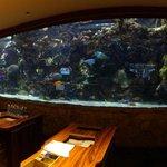 Amazing aquarium
