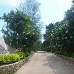 Resort Driveway