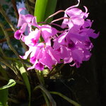 Orchids at The Inn