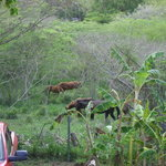 Our neighbors - The horses of Vieques