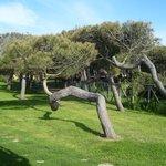 particolari di questi alberi