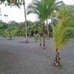 Palmeras de la playa del hotel