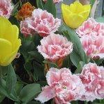 carnation-like ones