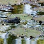 Pond's Master