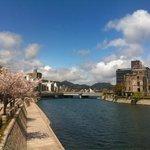 Cherry blossom in Hiroshima.
