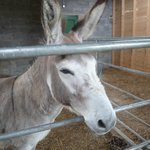 A resident at Clondanagh