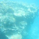 Coral seen from semisubmersible