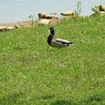 Foto de Freeman Lake Park