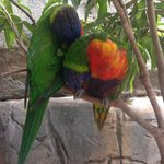 birds in the aviary, you can feed them