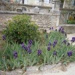 Vincent's flowers.