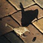 Our shadow bird