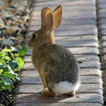 Bunny at My Place