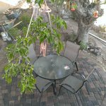 Mulberry tree sitting area