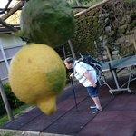 Kissing a huge lemon in their lemon grove!