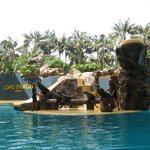 ЛОРО парк, шоу морских котиков