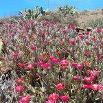 Lanzarote Flora