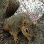 Coer d'Alene friendly squirrel