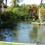Grounds near Platinum restaurant, flamingos are always found here