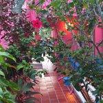 Escada que da acesso é um jardim