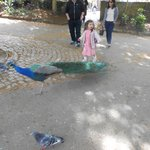 Little Girl and Peacock