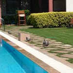 Pigeons in the pool area