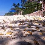 Foto de Playa las Gemelas