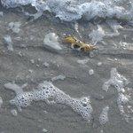Friend at Beach