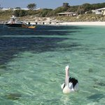 shores of Rottnest Island