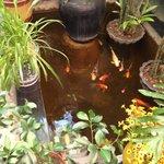 goldfish pool