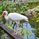 Flamingo Gardens  |  3750 S. Flamingo Road, Davie, FL 33330