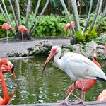 Flamingo Gardens  |  3750 S. Flamingo Road, Davie, FL 33330