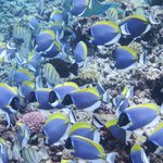 Myriad of fish seen on snorkeling trip with Sagittarious from Anse Volbert