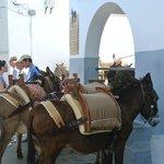 les ânes à l'entrée du village(5 euros)