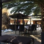 Au calme sous les palmiers