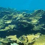 Well preserve reef
