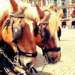 Horses at Grote markt