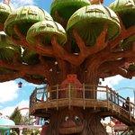 l'arbre du sésamo