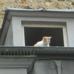 gatto dei tetti parigino