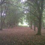Elmdon Park, near the old walled garden