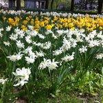 Flores central park