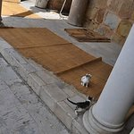 モスク内の子猫