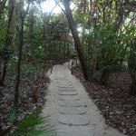 Path to our treehouse