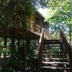 Stairs to our treehouse