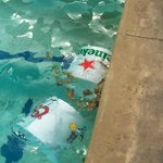 TRASH IN THE POOL